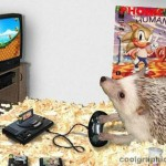 Why Hedgehogs are Awesome