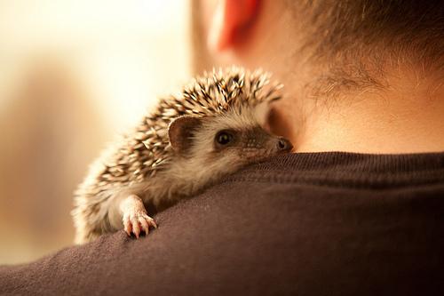 Pix For > Hedgehog Tumblr