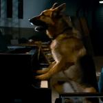 best worst movies cool dog