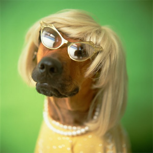 DOG-IN-WIG-10-1320333418
