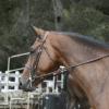 MT_Horse
