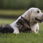 5 Tips for Managing Your Pet's Allergies