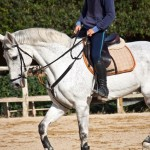 Horse Riding: A Fun Way of Keeping Fit