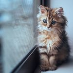 5 Signs Your Cat is Suffering from Anxiety