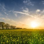 How to Make the Most of Spring