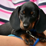 Can You Afford A Puppy? – Guide to Common Ownership Costs