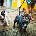Purity Petibles CBD Review & Coupon Code for Pets