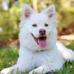 Recognizing When Your Dog is Healthy & Happy