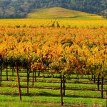 Why Autumn Is The Best Time of the Year To Visit Napa Valley
