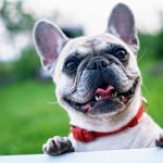 Top Tips for Introducing Children to New Dogs