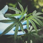 New to the World of Cannabis? Don't Make These 6 Beginner CBD Mistakes