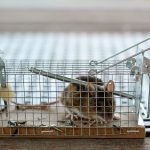 Why There's a Need for a Rat Exterminator